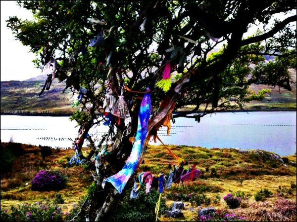 rag tree (Ireland)