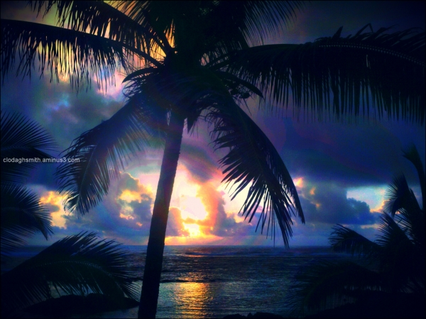 sunrise palms