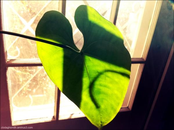 leaf in winter light