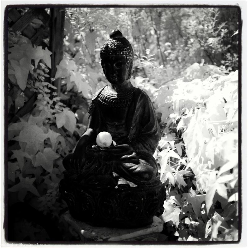 corner of the garden buddha