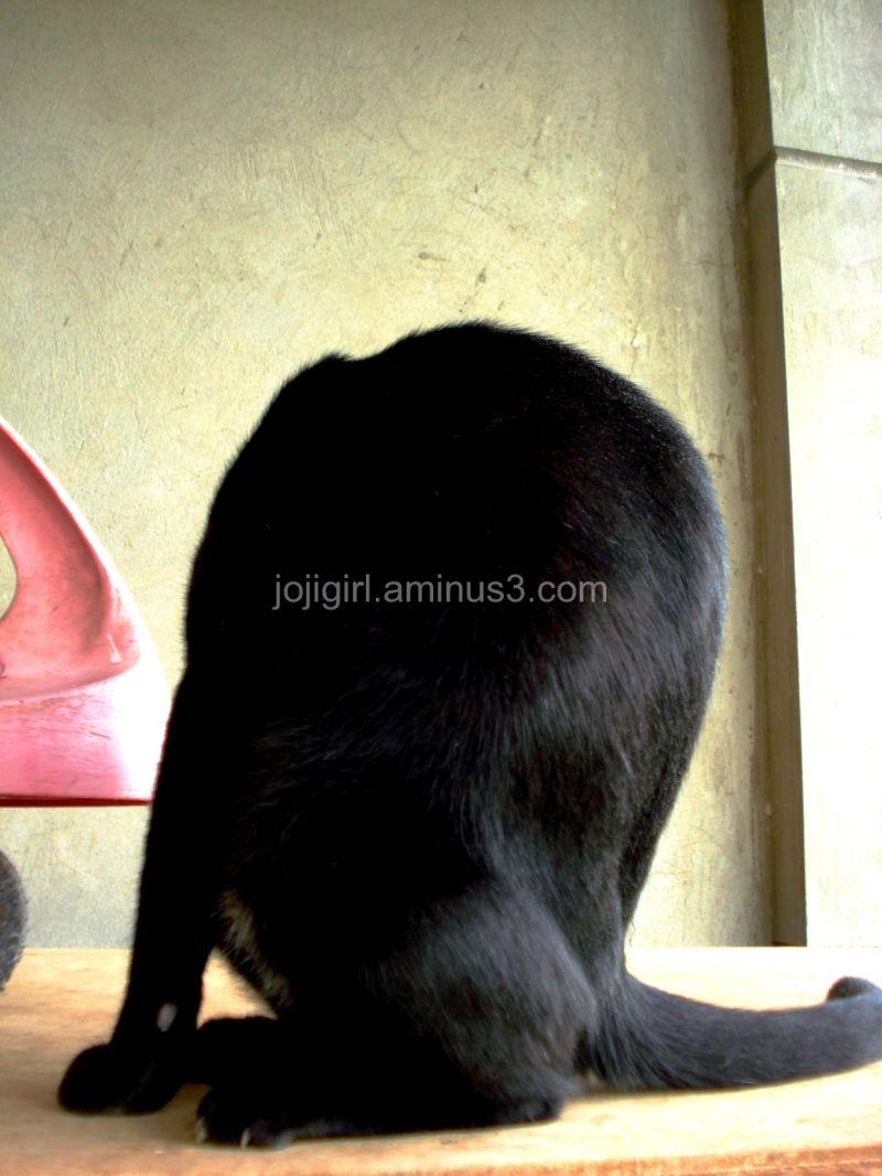 Headless Cat