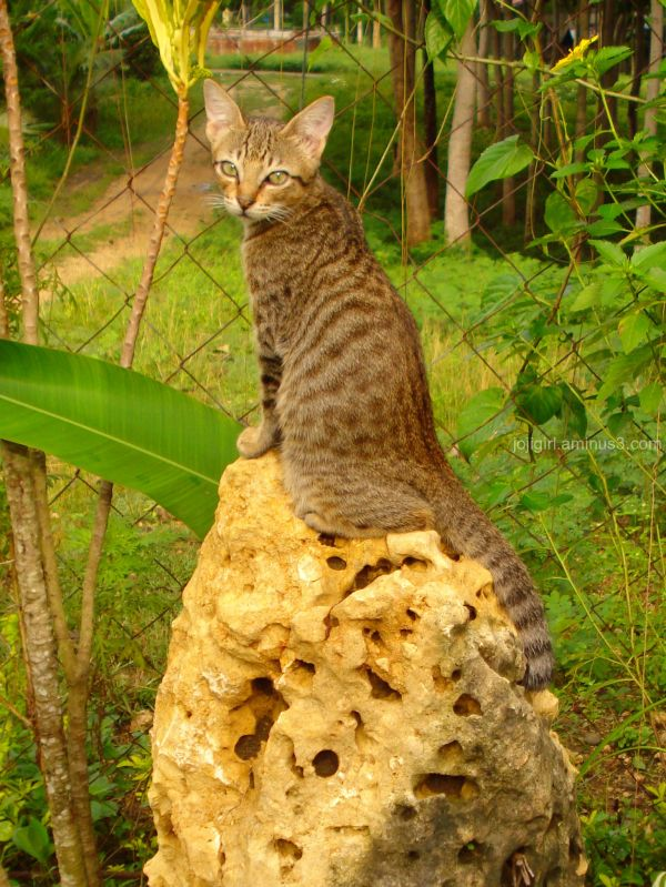 Cat Throne :)
