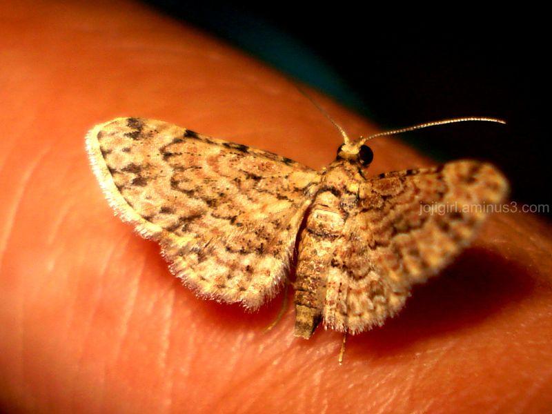Moth on my Finger