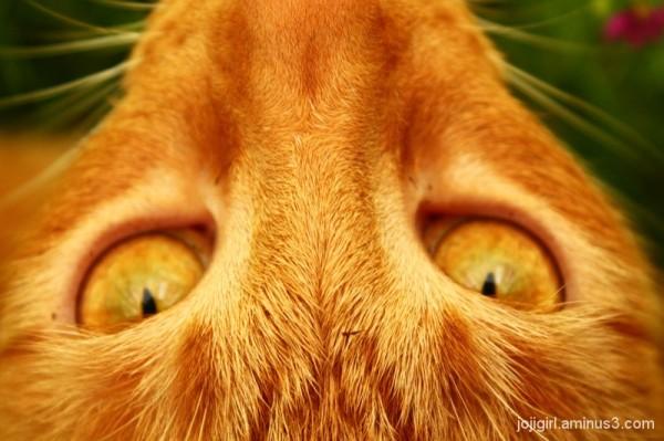 Orange-eyed Simon