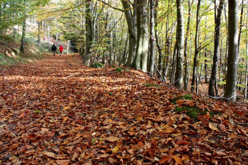 Dunkeld Forest