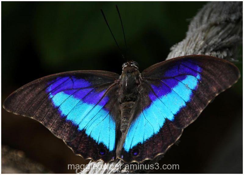 Flourescent Blue