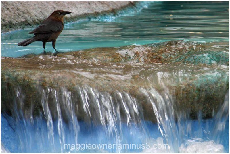 Water crossing...