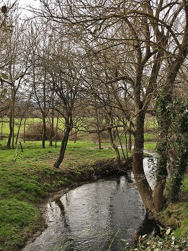 El arroyo / The stream