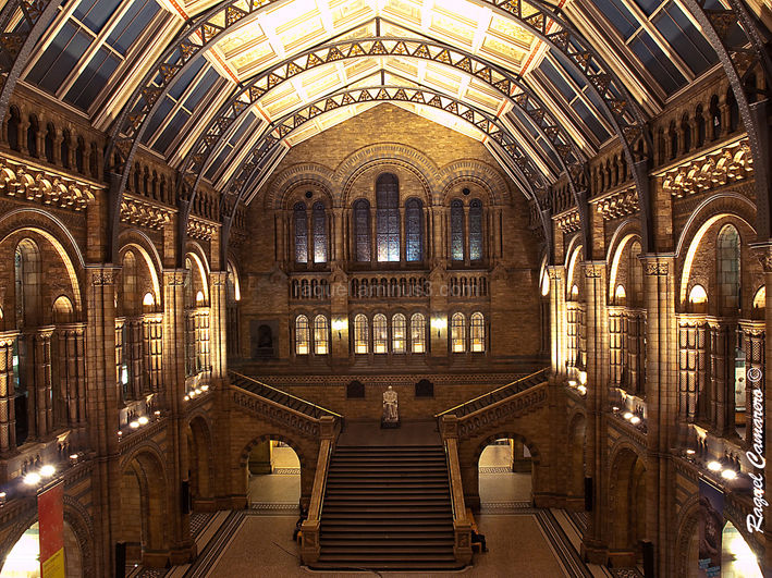 National History Museum Hall