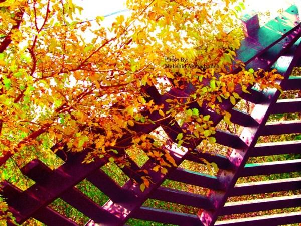 زیر سر پاییز