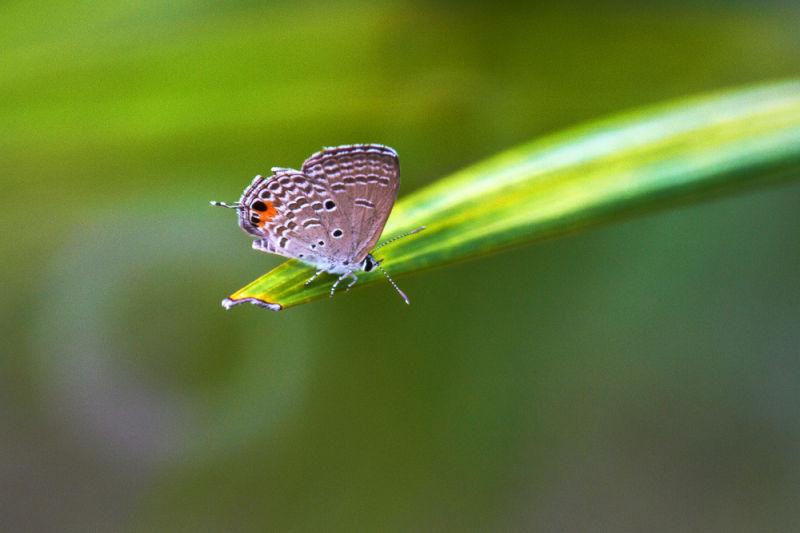 Butterfly 停留点