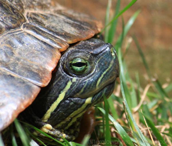 Turtle Sunday