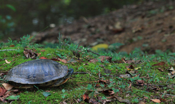Turtle Thursday