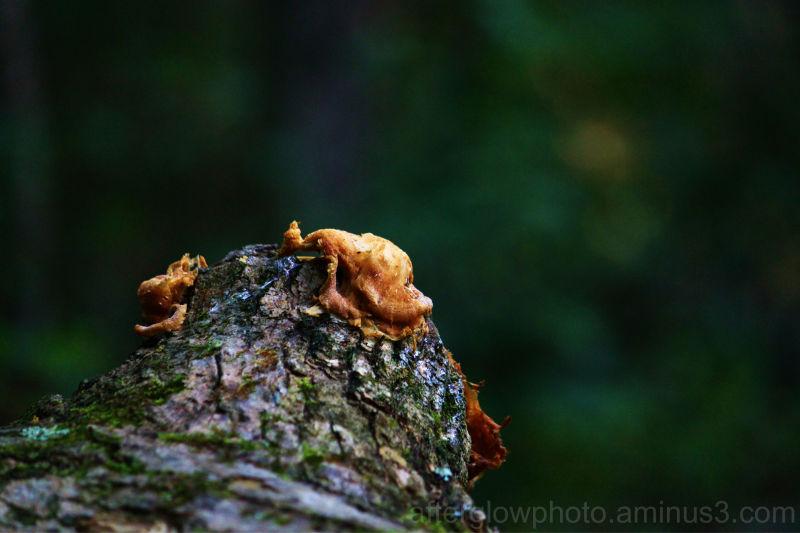 Fungi - 174