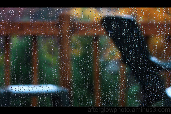 Rainy Day in Georgia