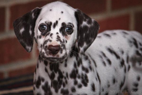 Puppy Week - Day 1