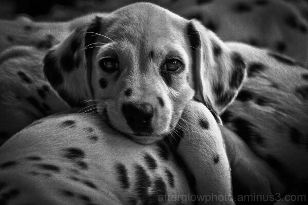 Puppy Week - Day 2