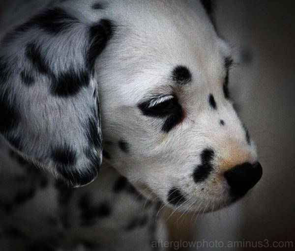 Puppy Week - Day 4