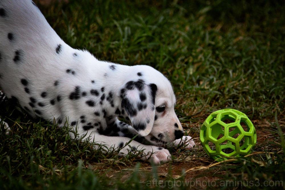 Puppy Week - Day 7