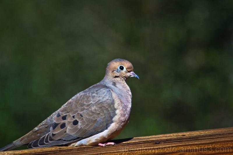 Bird Watching...