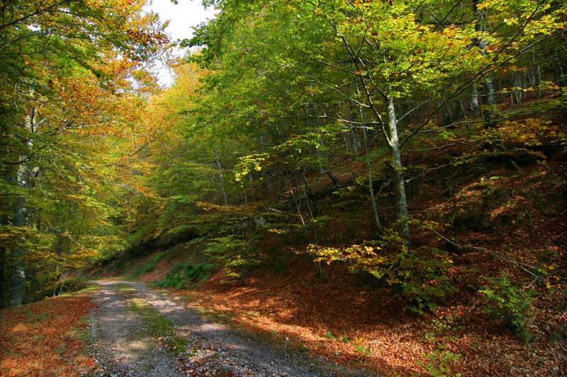 Los colores de mi bosque
