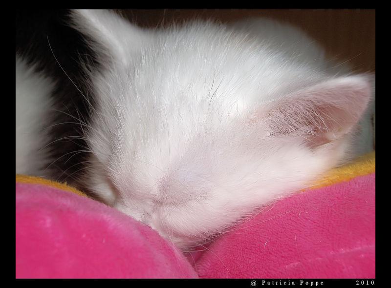 Loesje en de kittens