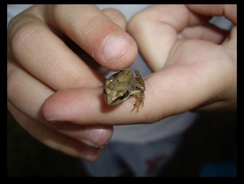 Litle frog