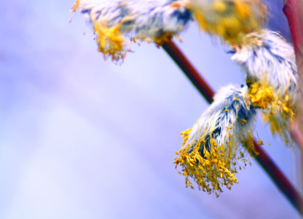 finally ... pastel spring #1