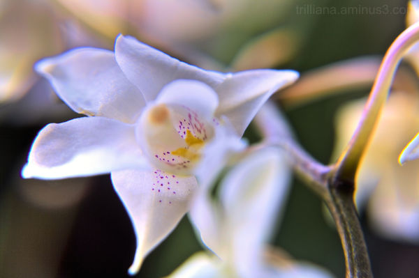 flower power #7
