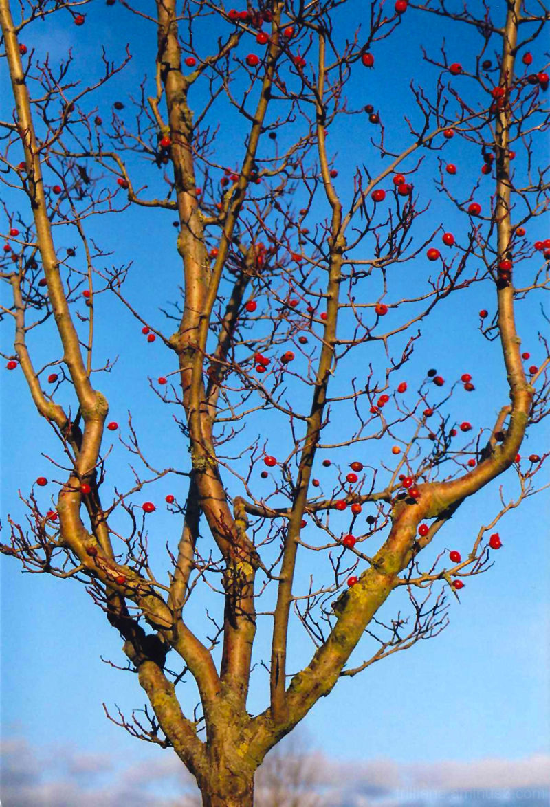 analog vision #7 - autumn fruits
