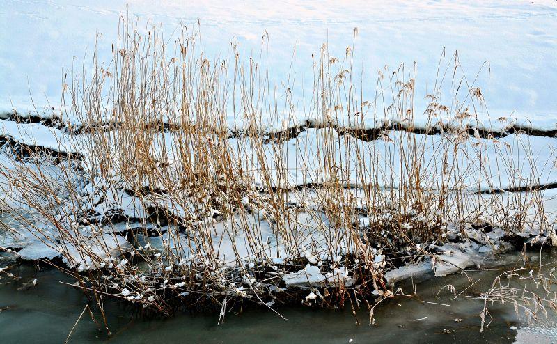 still living - the winter series #3