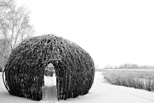 mushroom head - the winter series #9