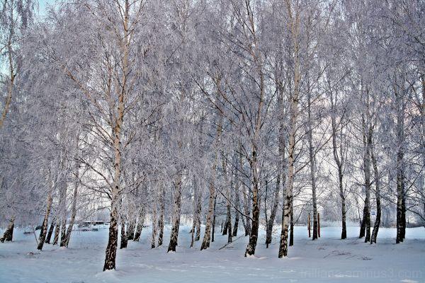 pristine - the winter series #10