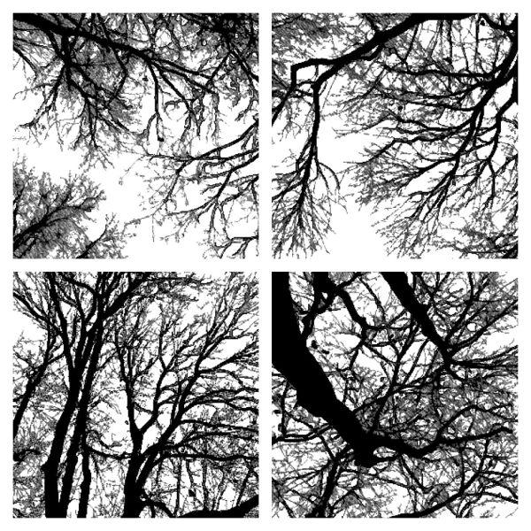 treelouette