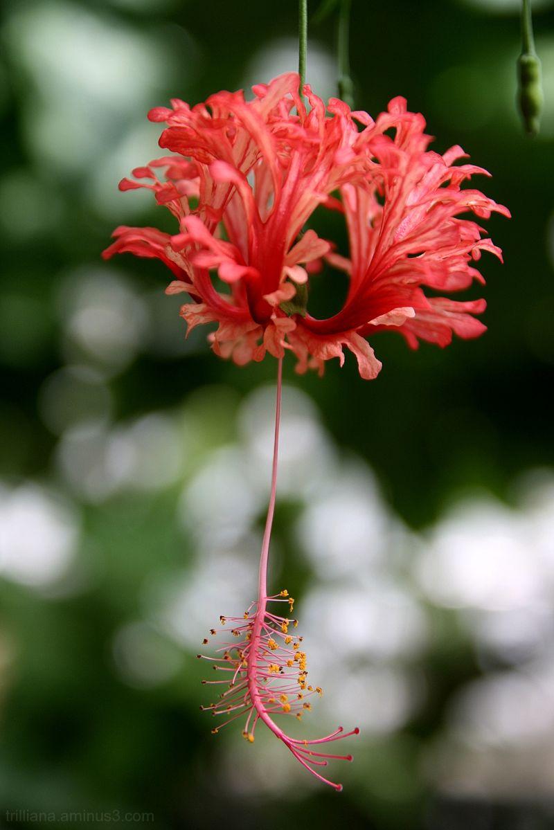the botanic garden series #10