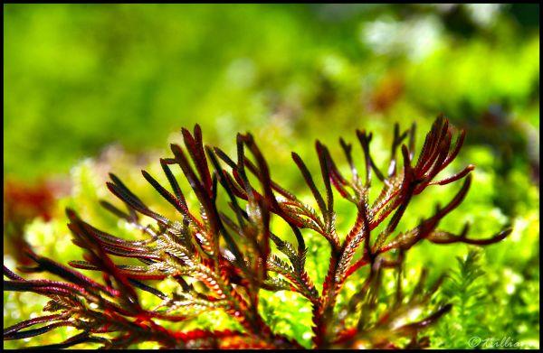 the botanic garden series #12