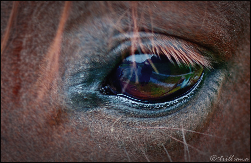 the world through a horse's eye