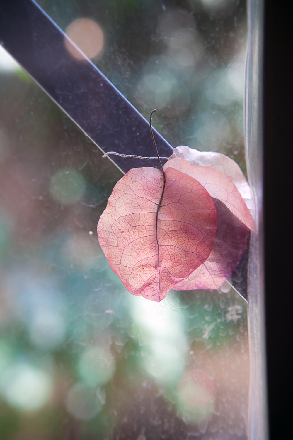 fall in june