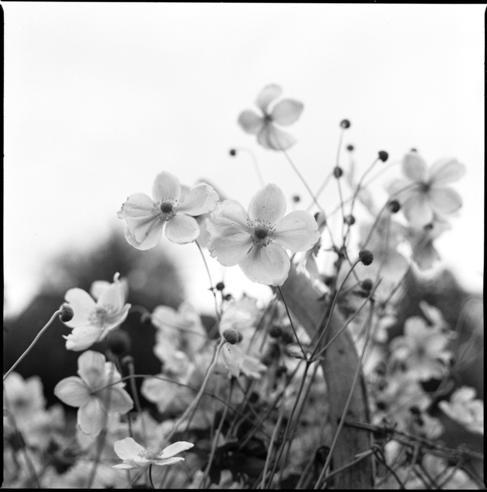 zenza bronica s2a. first attempt