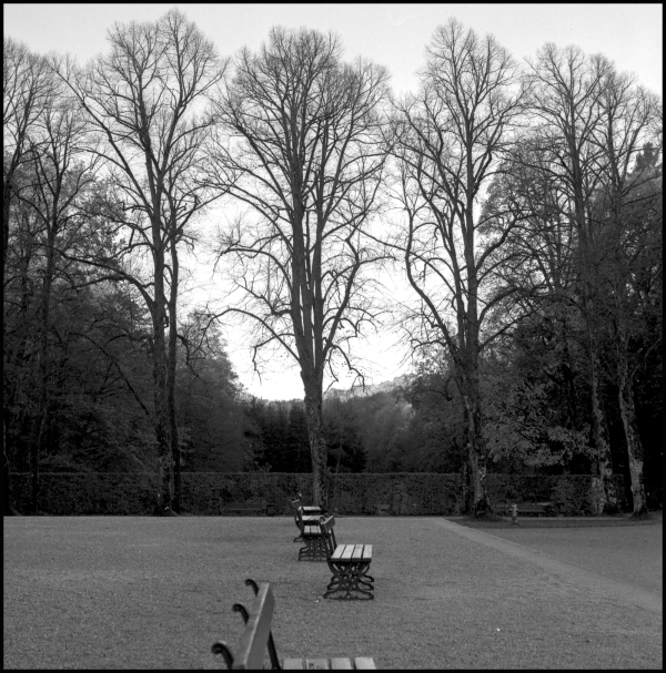 trees & benches