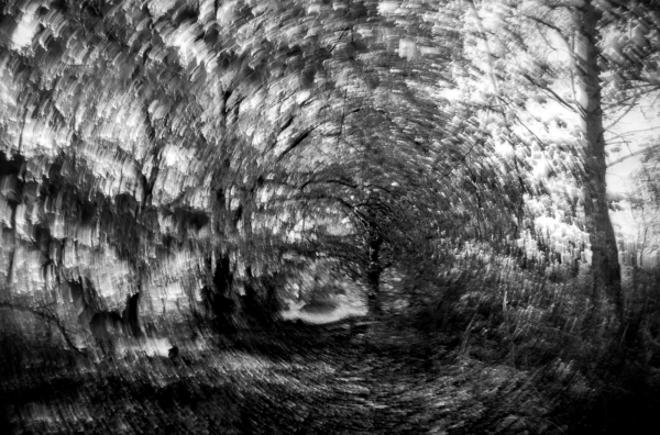 dizzyness (the moving woods) #4