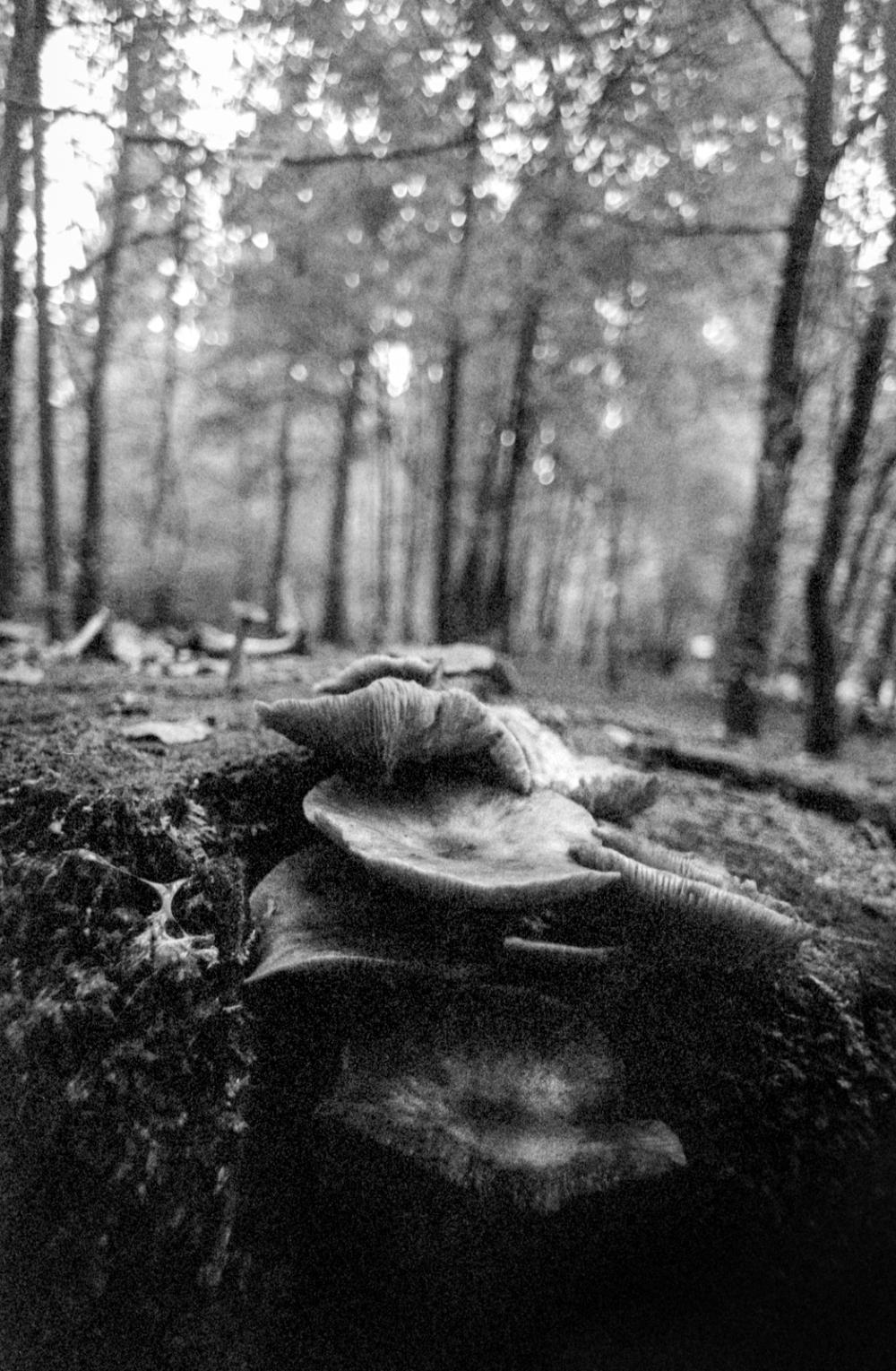 fall mushrooms #1