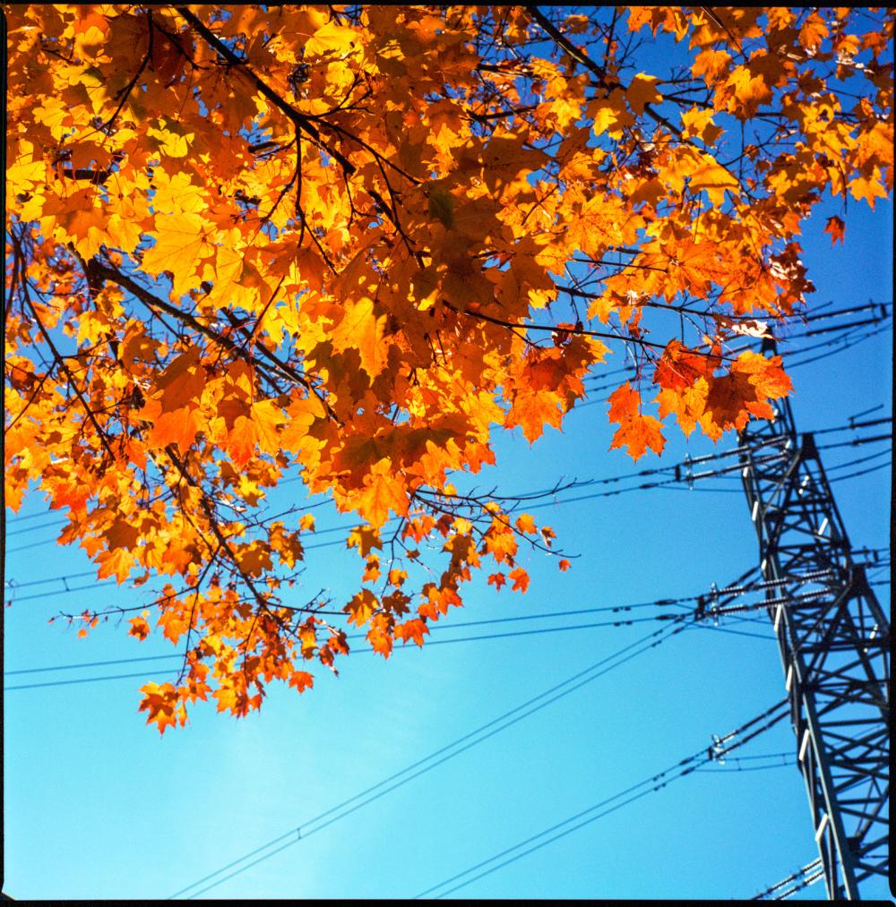 fall again #1