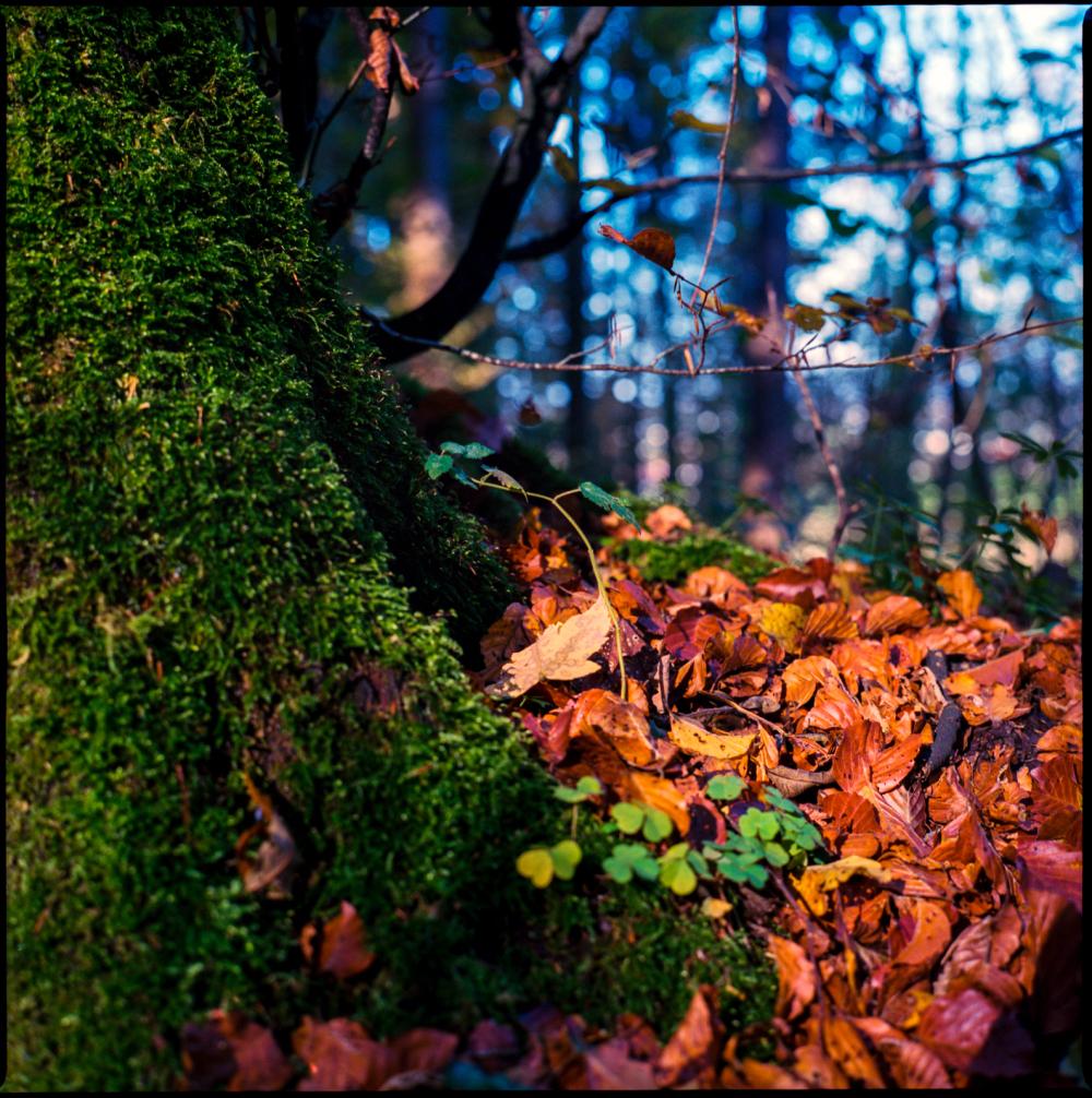 fall again #7