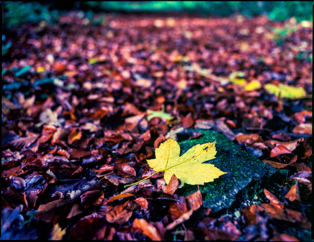 fall again #9