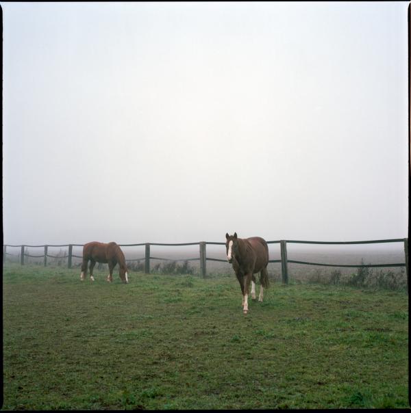 one foggy morning #2