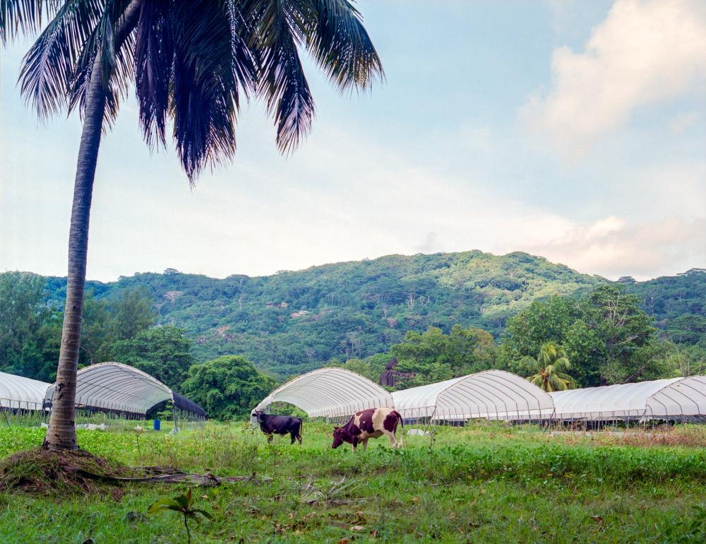seychelles #40