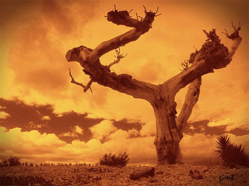 olivo rojo paisaje benicarlo ramas