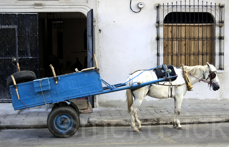 horse cart nicaragua