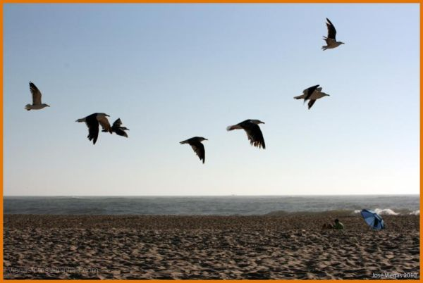 Praia das Paredes